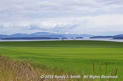 Central Saanich fields & ocean