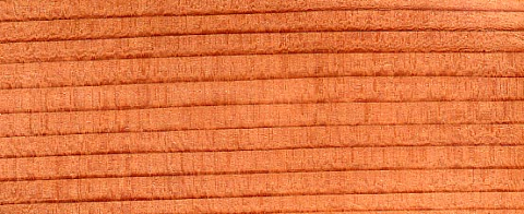 Example of Coastal Red Cedar
